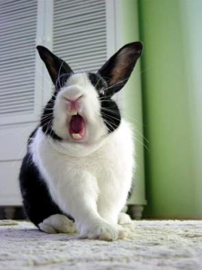 Killer Bunny Rabbit
