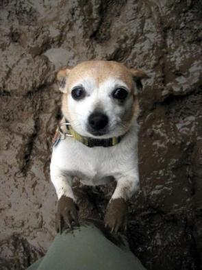Cute Muddy Dog