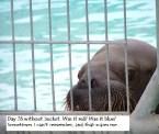 Poor Walrus