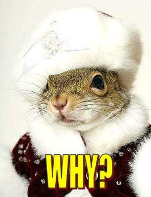 Why Squirrel?
