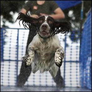 Midflight Water Dog