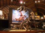 Humping T-Rex