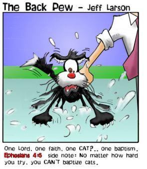 Cat baptism