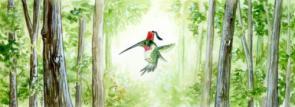 Hummingbird with a Fez