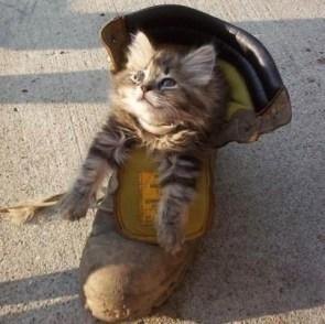 Cute Cat In A Boot