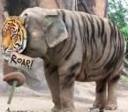 Tiger Elephant