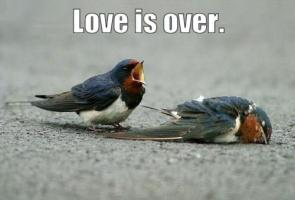 Love Is Over