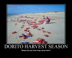 Dorito Harvest Season
