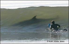 Surfing the Shark