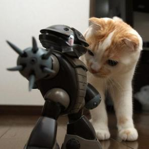 Kitty Vs Battle Bot