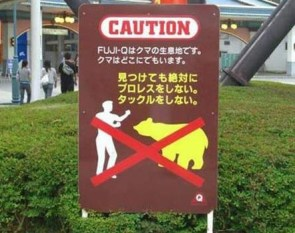 Don't Fight The Bears