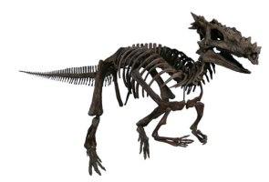 Dracorex Hogwartsia