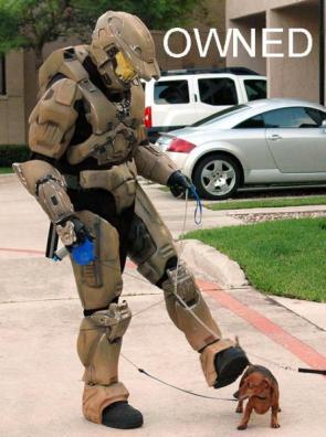 Halo Dog Walker