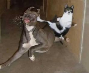 NINJA CAT!!!