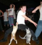 Insane party cats