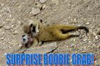 Surprise Boobie Grab!