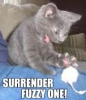 Surrender!
