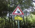 Frogs Warning