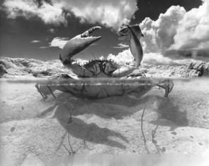 Super Water Crab