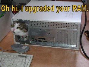 Cat Upgraded Your RAM