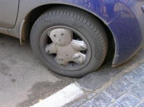 Teddy Bear Rims