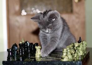 Kitty Chess