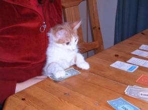 A Cat Playing Monopoly