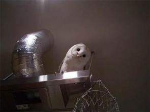 Air Conditioner Owl