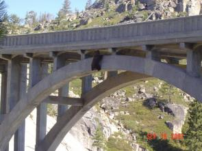 Bear falls off bridge but HOLDS ON and spends  the night there.
