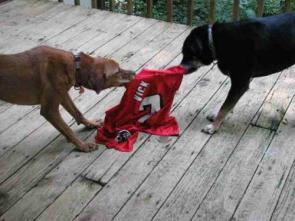 Dog's Revenge On Vick