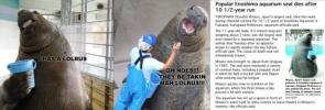 The Lolrus (bucket) seal is dead.