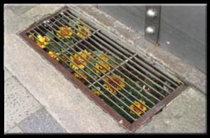 Drain Ditch Flowers