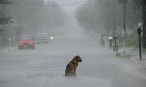 Sad Dog In Rainy Street