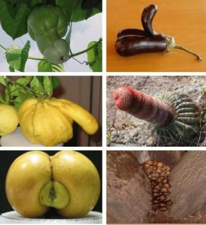 NSFW – Erotic Fruits/Plants