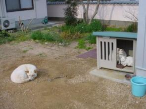 Dog House WTF