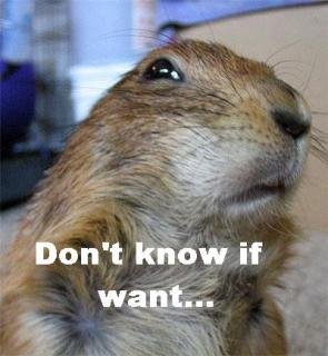 Squirrel – don't know if want…