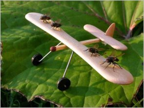 fly-plane.jpg