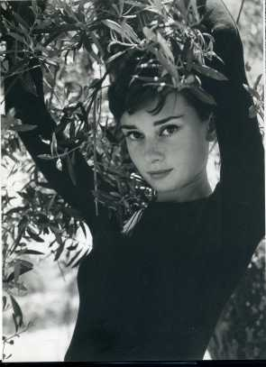 Hepburn Tree