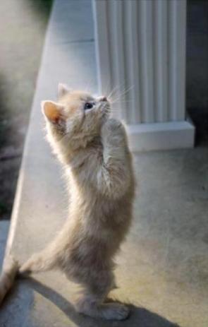 prayerful cat
