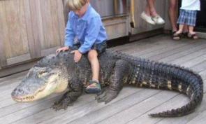 Kid on alligator