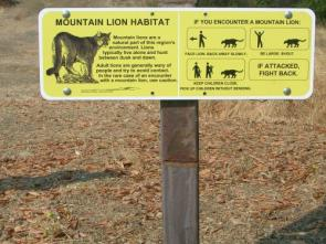 Moutain Lion Attack Sign
