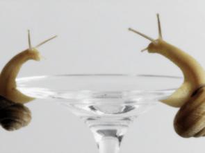 Snail Martini