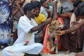 Doggy Bride