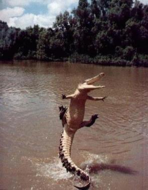 Jumping Croc!