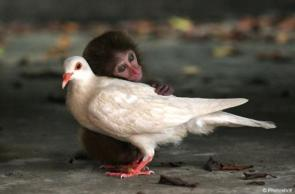Monkey Dove Love