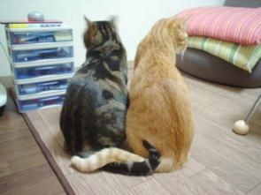 Best Friend Cats
