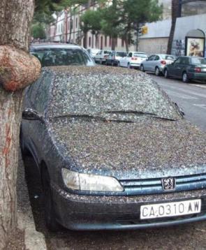 Poopy Car