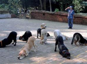 Well Trained Dogs
