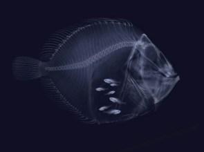 hungry-fish