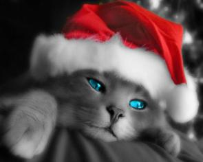 Blue Eyed X-Mas Cat